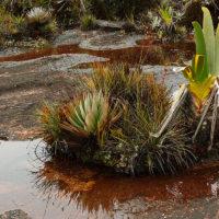Auf einem solchen Kissen leben bis zu 20 verschiedene Pflanzenarten