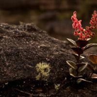 Pflanzen und Felsen teilen sich die Oberfläche des Roraima