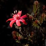 Wunderschöne Flora auf dem Roraima